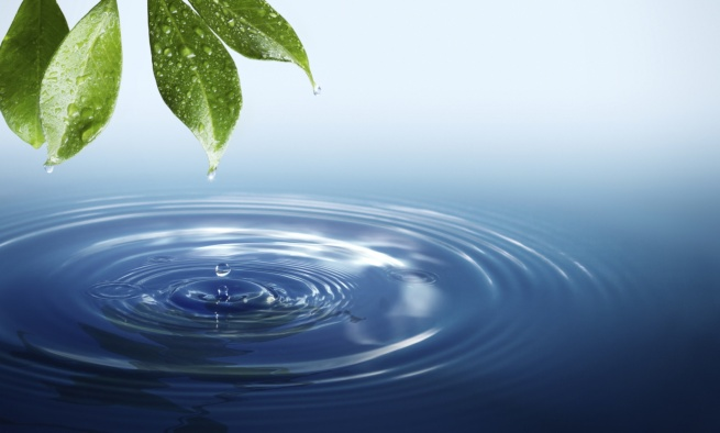 water-life-crop
