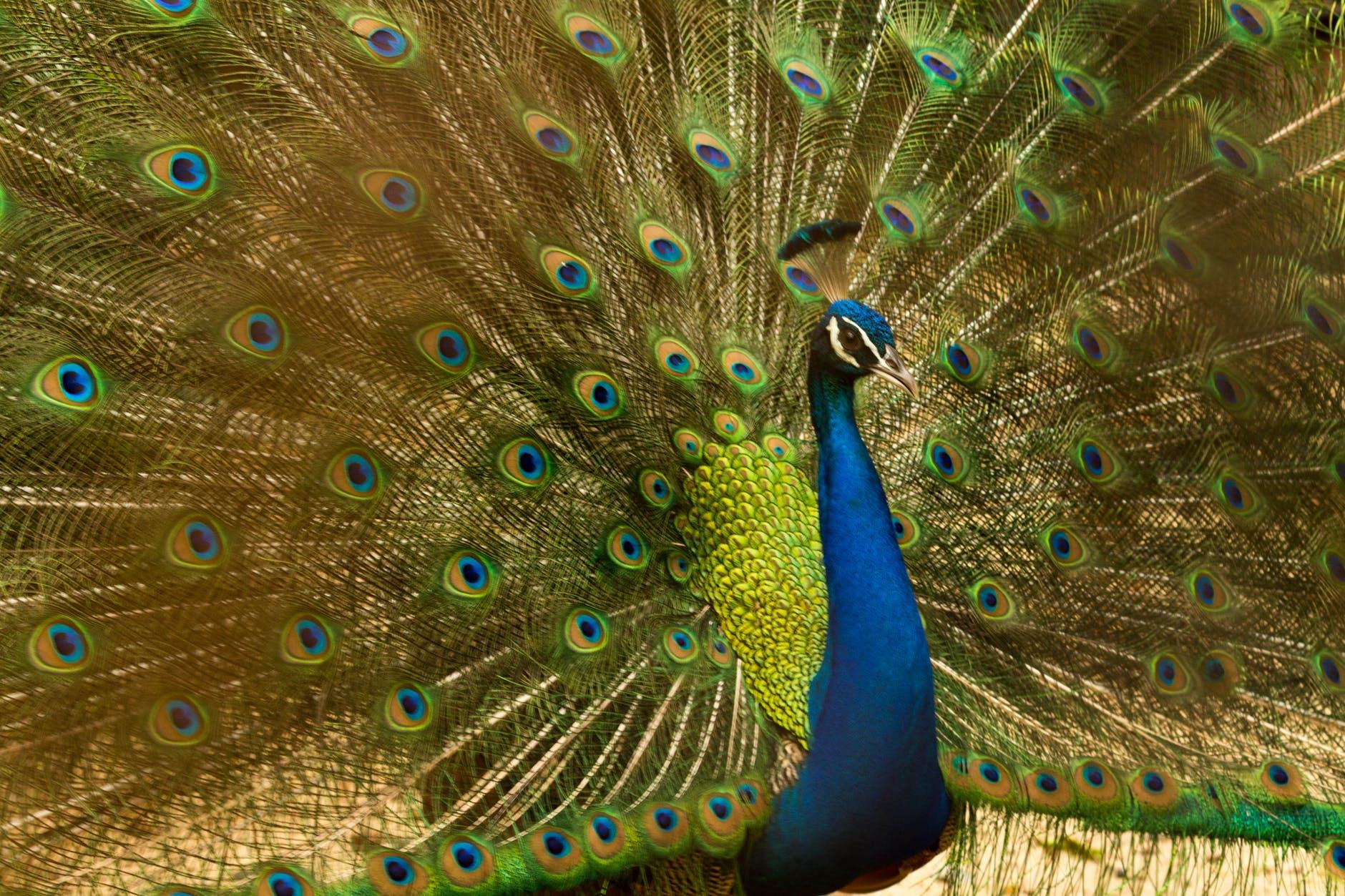 animal bird blue bright