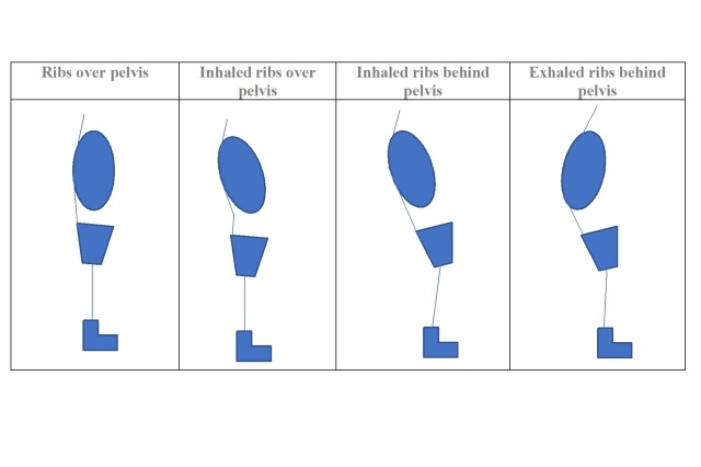 Rib pelvic alignment
